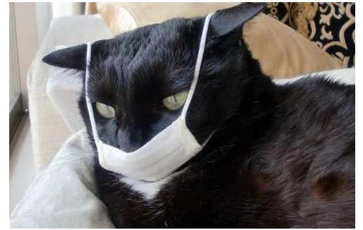 Cara-Mengobati-Kucing-Flu-Secara-Alami